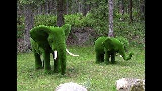 видео Топиарии: как создать необычное украшение сада. Фото.