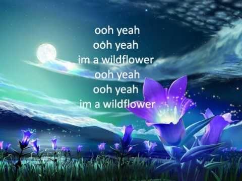 wildflower w lyrics by janeDear girls