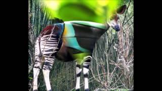 Zwierzęta lasów równikowych