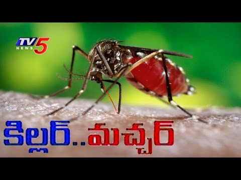 Mosquito Season - How to Avoid Mosquito Bites ? - Mosquito Prevention Tips - TV5 News - 동영상