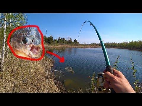 Словил рыбу мутанта в реке Припять. Рыбалка в Чернобыле. Что делает радиация с животными