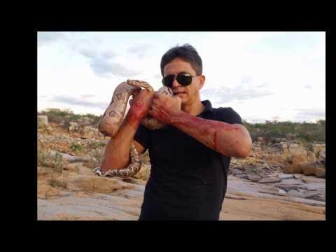 ACIDENTE COM  COBRA JIBOIA, VIDEO 01