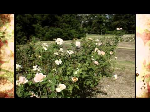 Oklahoma Rose Gardens