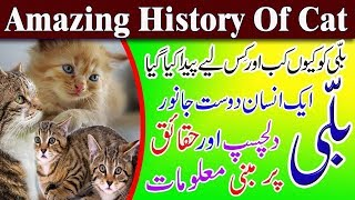 Interesting Facts About Cats In Urdu  Facts About Cats Behavior  Cat Facts You Wonand39t Believe