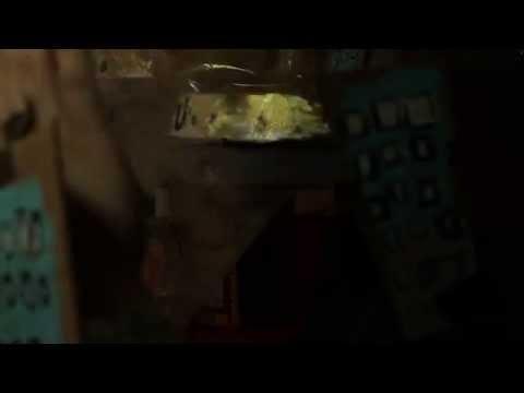 Ava Mendoza - Shapeshifters (Official Video!)