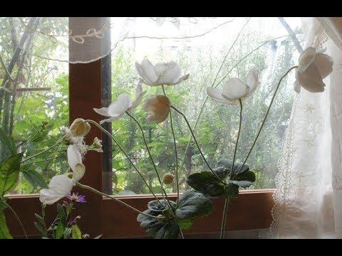 小さな窓の花ごよみ  728 白花の調べ ♪ 白い花 他:つのだたかし(静かな音楽)