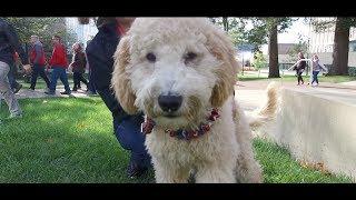 Best Dog Training in Columbus, Ohio! 6 Month Old Double Doodle, Jethro!
