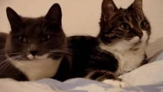 Котики прелестно мурлыкают
