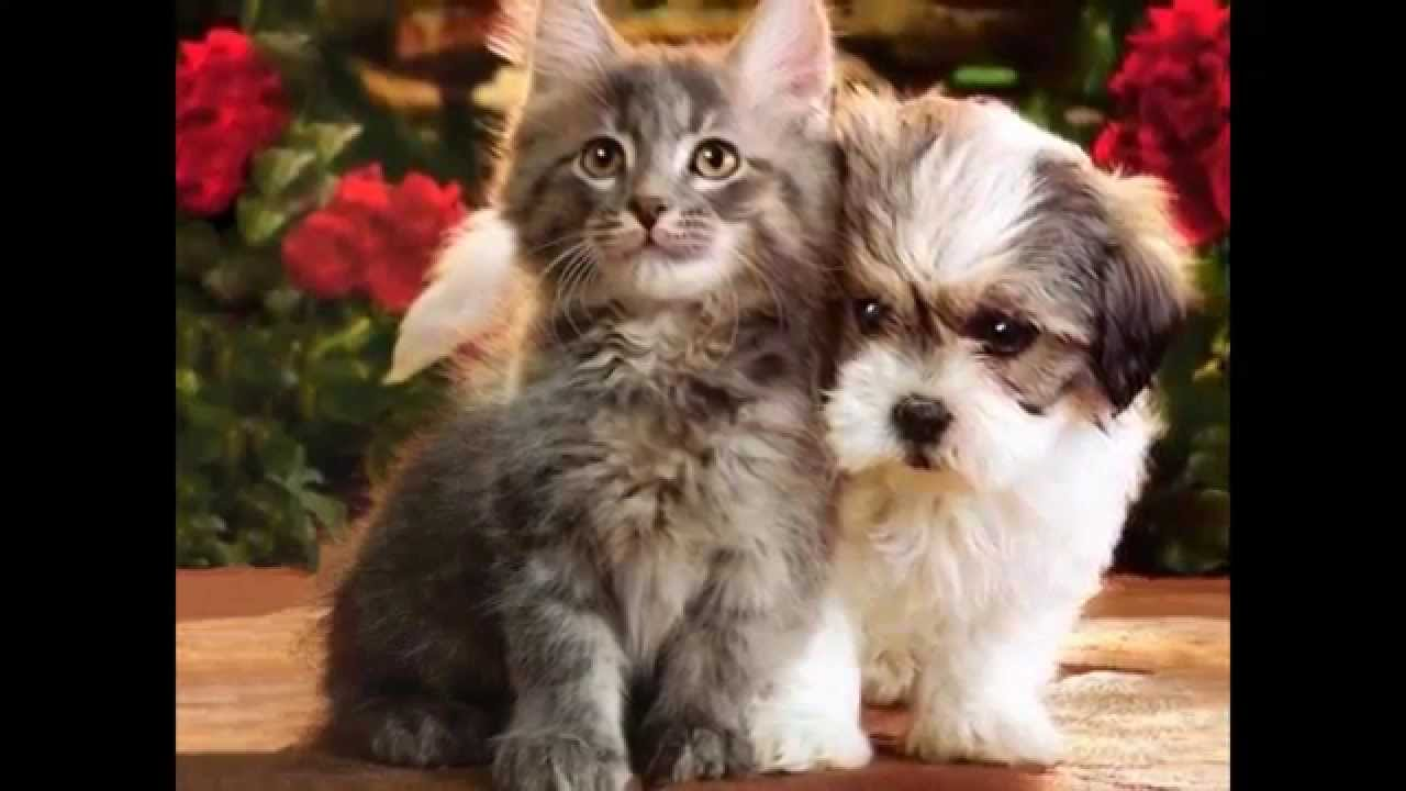 Cutest1S Pets And Animals Xxx - Youtube-8635