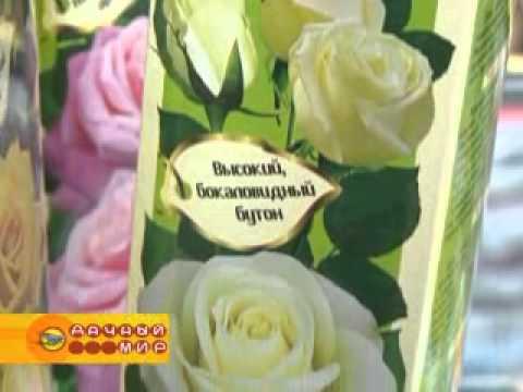 Розы  Сибирской селекции