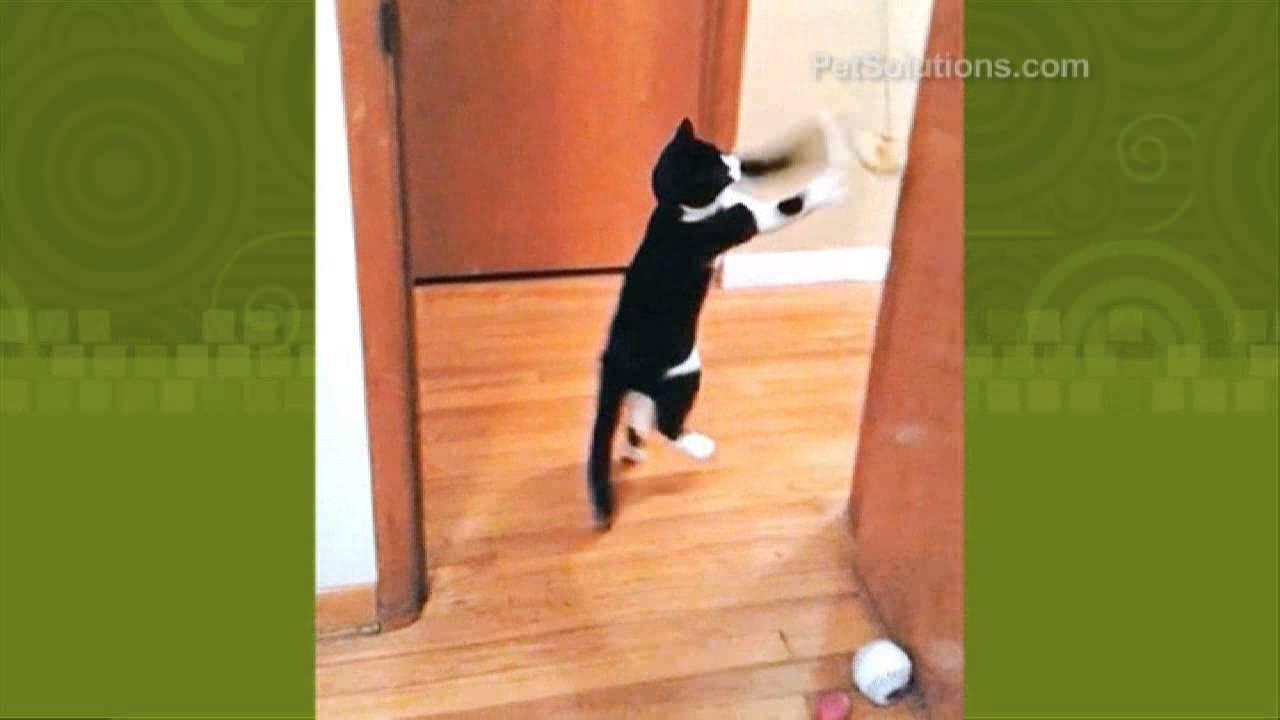 PetSolutions Spot A-Door-Able Plush Bird Cat Toy & PetSolutions: Spot A-Door-Able Plush Bird Cat Toy - YouTube
