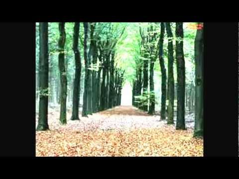 DEEP HOUSE MUSIC (Deep Forest)