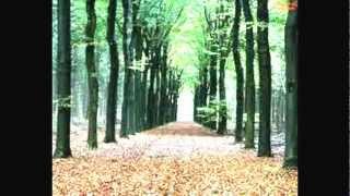 DEEP HOUSE MUSIC (Deep Forest)