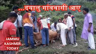 MUST WATCH ,AMAZING  HELP,  Animal lovers,  Animal with broken legs,treatment of a cow,pet lovers