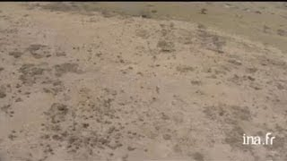Botswana : aigle en vol