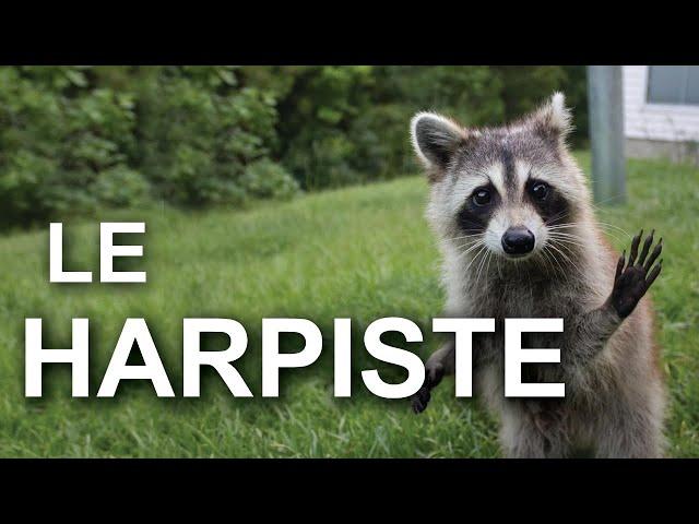LE HARPISTE - PAROLE DE RATON LAVEUR - Parole de chat