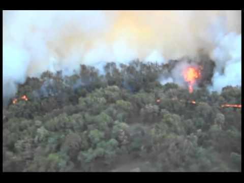 Fuego Arrasa Con Bosque De La Primavera Youtube