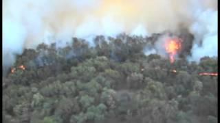 Fuego arrasa con Bosque de la Primavera