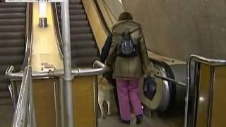 Собаки-поводыри в метро, Первый канал 11.02.2012