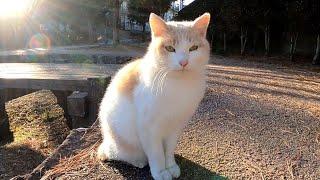 公園に野良猫がいたのでナデナデしたら喜んで膝の上に乗ってきた