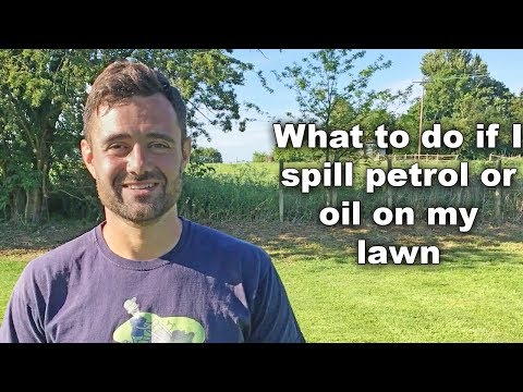 What to do if you spill petrol or oil on my lawn