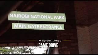 A visit to the Kenya Wildlife Service Nairobi National Park #WeAreOpen #TheMagicAwaits #MagicalKenya