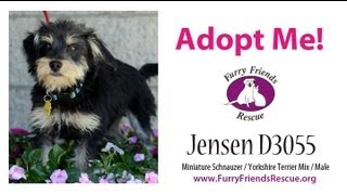 Adopt Me! Jensen D3055 At Furry Friends Rescue, Sf Bay Area