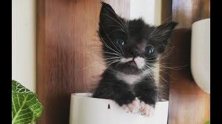 Из-за проблем с сердцем котёнок весил всего 113 граммов, но полюбуйтесь каким красавцем он стал!