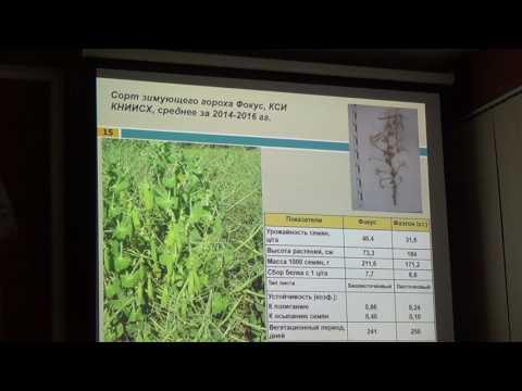 Трава кормовая: козлятник, клевер, люцерна, донник