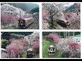 Rail Archives わたらせ渓谷鉄道 桜・花桃満開の神戸駅ハイライト 2017- 3- 21制作