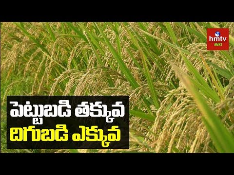 Paddy Cultivation in Natural Farming | Kadiyam Village Farmer Success Story | hmtv Agri