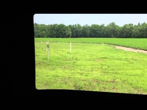 30 acres in Gates County, NC: Orchard Stand