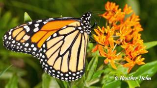 EcoBeneficial Interview: Pollinators of Native Plants With Heather Holm