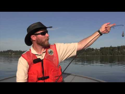 Fishing For Dogfish Shark In Puget Sound