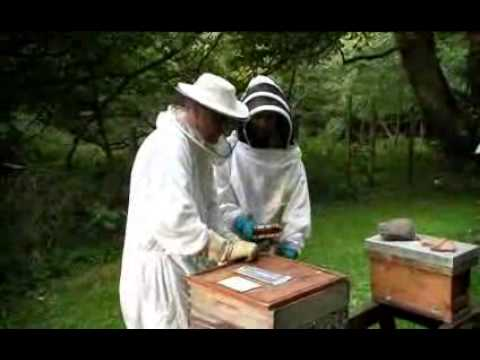 Stuart Hayes explains beekeeping on Dublin's City Channel