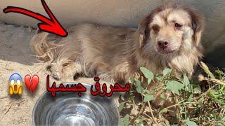 انقاذ كلبه ضربوها اصحابها ورموها بالشارع 💔