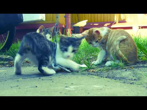 Kittens and a kitten wagon 4k UHD 🐈 🐱 Cat circus (Royalty free music YouTube audio)