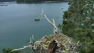 Audubon Osprey Nest Cam 06-18-2018 09:12:30 - 09:40:15