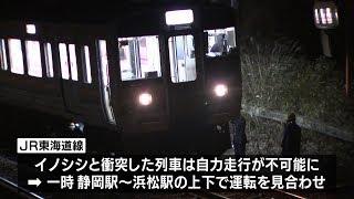 JR東海道線の電車に23日イノシシが衝突する事故があり静岡駅から浜松駅...