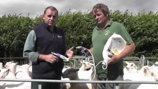 How to guide for pour on application for Sheep Sterimatic & Hook Norton vets jul14