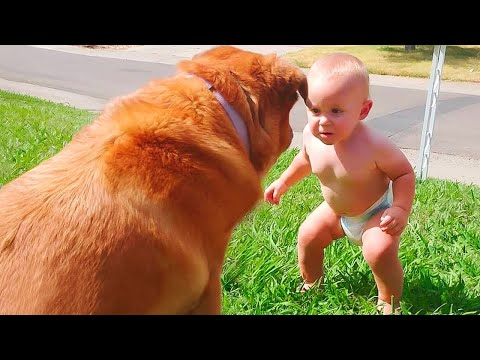 Funny Videos Animals  - Try not to laugh - Dog 2020