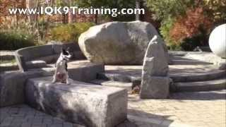 "Iq K9 Training | Obedience Dog Training In Carlsbad- Teaching A Dog To ""come"", ""place"" And ""sit"""