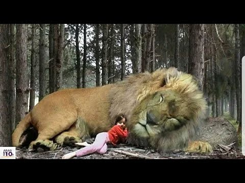 هذه الطفلة غلب عليها النوم بجانب الاسد.. شاهد ما فعل لها الأسد !!