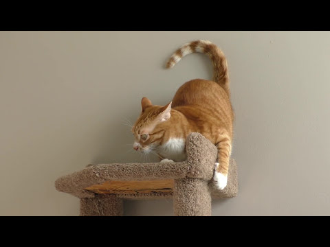 This Cat Will Make You Laugh!