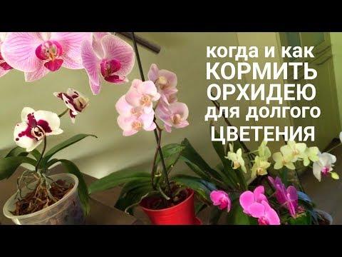 Когда и как кормить ОРХИДЕЮ чтобы цвела орхидея дольше и пышнее