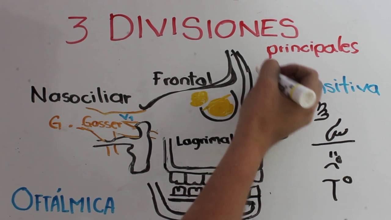 Nervio Trigemino - YouTube