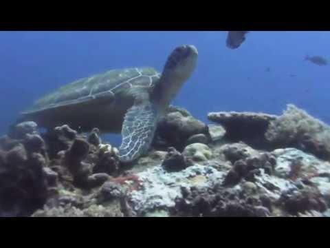 PRODIVING Palau 2015