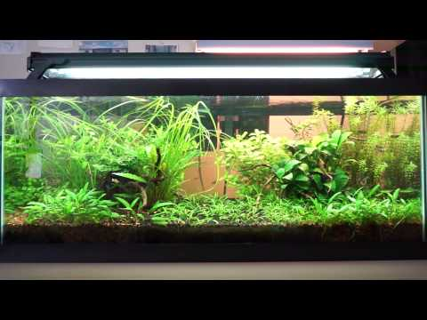 Fish ramble on film nature and planted fish tanks
