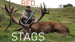 REDSTAG RED STAG