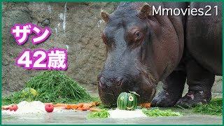 Hippopotamus at Maruyama zoo in Hokkaido, Japan. Zan ,female,42 yea...